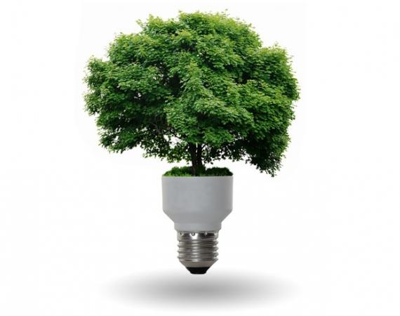 Los residuos de la poda de árboles una nueva fuente de energía